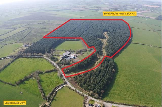 Forestry c. 61 Acres, Crandaniel, Kilmuckridge, Co. Wexford